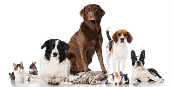 Ontwikkeling huisdieren